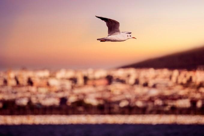 Как получить рабочую визу в Турции